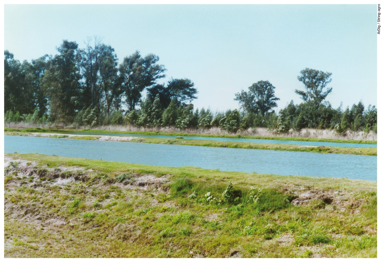 La soja es el principal recurso para el desarrollo de la acuicultura en el país