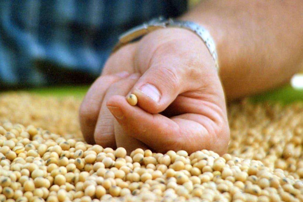 Aumentar la producción y la industrialización de la soja para salir de la crisis.