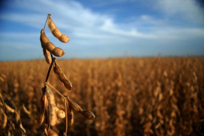 Comunicado: La cadena de soja opera legalmente y es el principal sector económico y generador de empleo del país